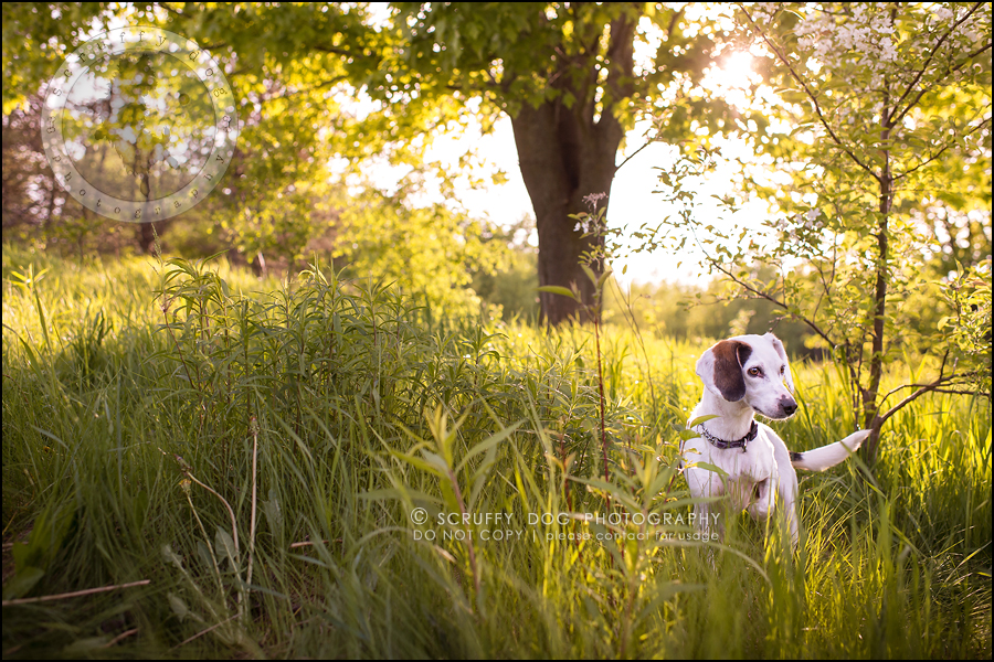 02-toronto-ontario-professional--dog-photographer-lucy frederick-59-Edit