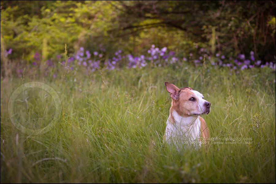 02-toronto-ontario-professional-pet-photographer-jade perry-391