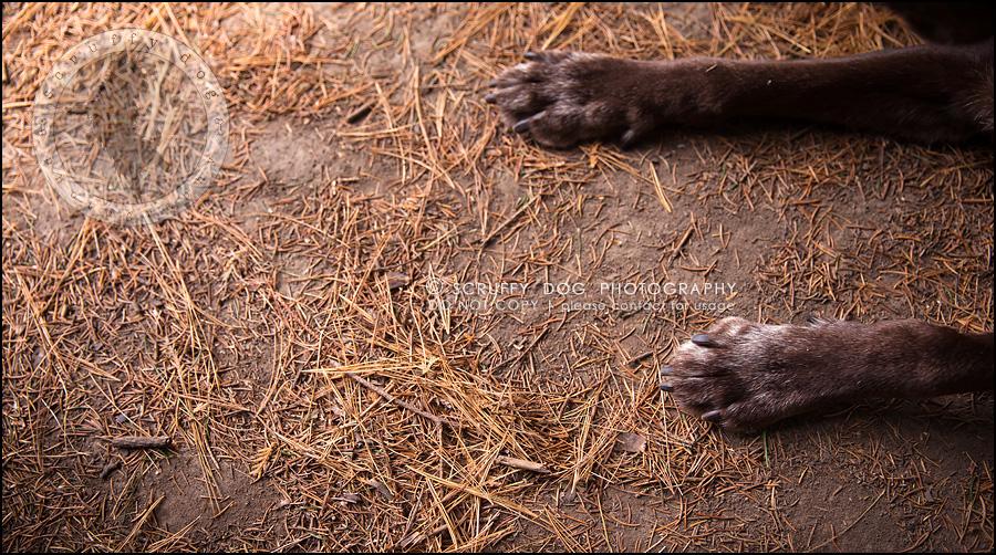 02-waterloo-ontario-best-professional-dog-photographer-max shoup-226
