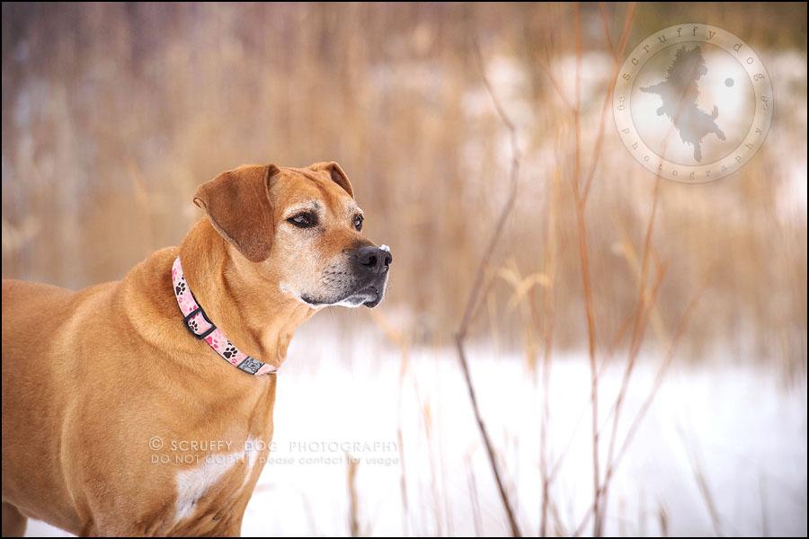 02-waterloo-ontario-professional--dog-photographer-best-makeda slinger-207
