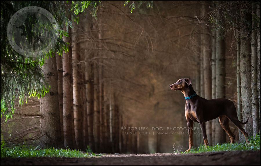 02_guelph_ontario_pet_photographer_best_dog_reese hunsberger-390