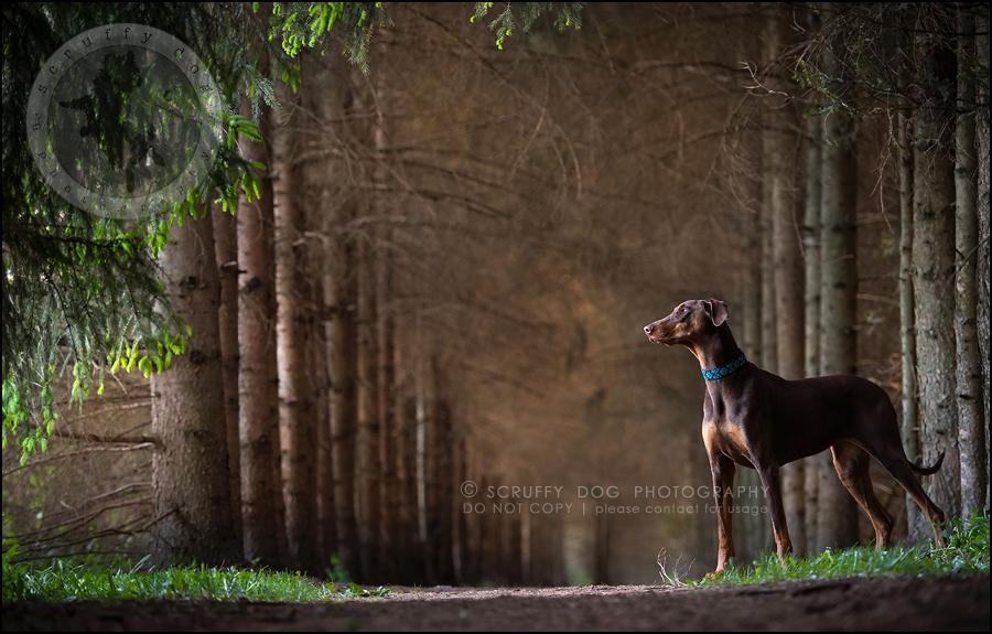 02_guelph_ontario_pet_photographer_best_dog_reese hunsberger-390