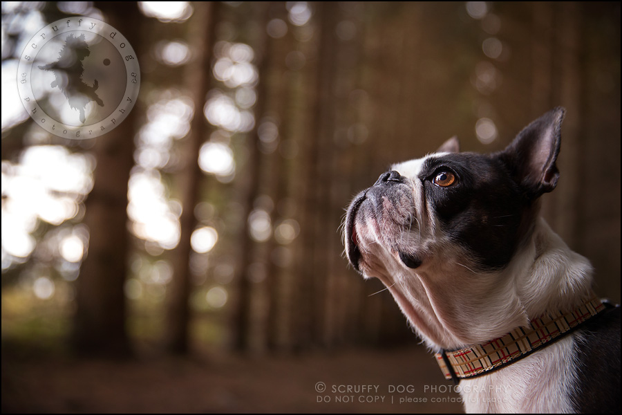 02_kitchener_ontario_pet_photographer_best_dog_princess dot carroll-86