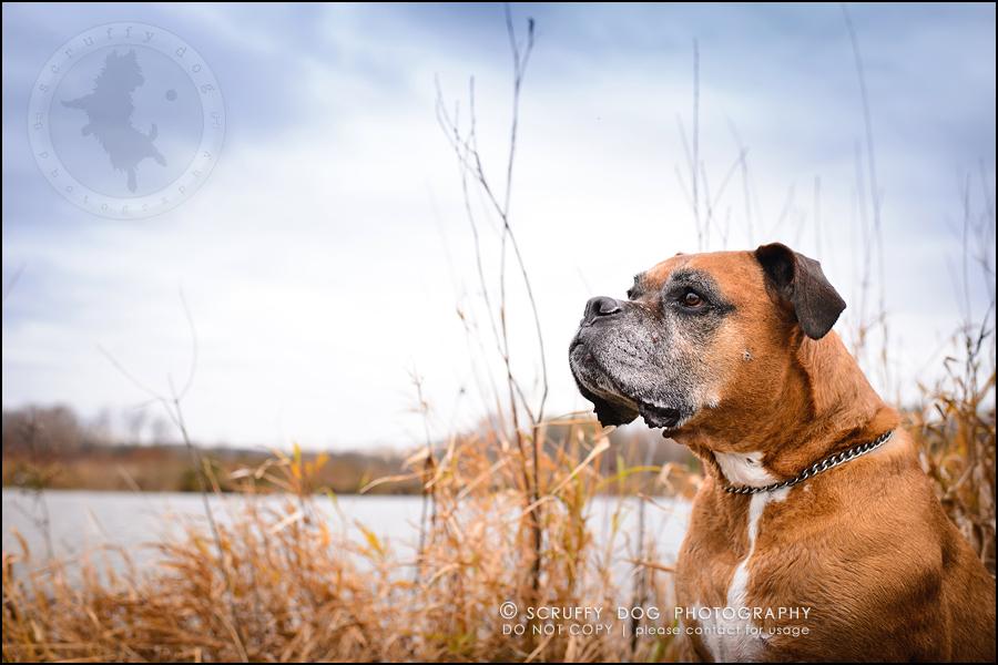 03-brampton-ontario-best-professional-dog-photographer-moose rocket-593