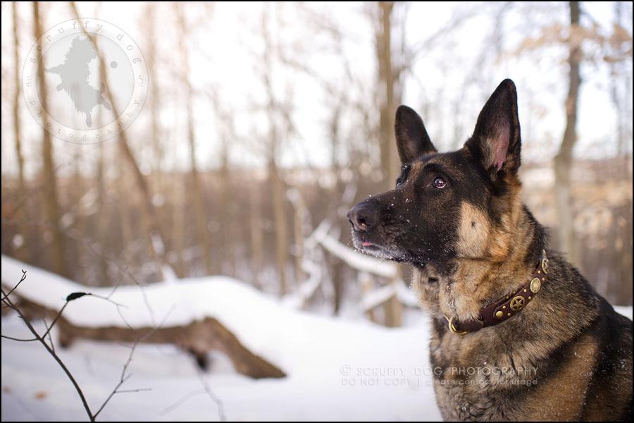 03-toronto-ontario-best-professional-pet-photographer-maya blitz-193