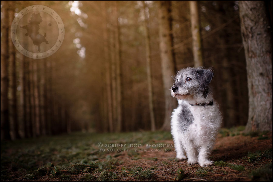 03-toronto-ontario-best-professional-pet-photographer-mika bobby worton-12