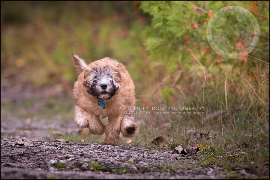 03-toronto-ontario-best-professional-pet-photographer-milford giza-27