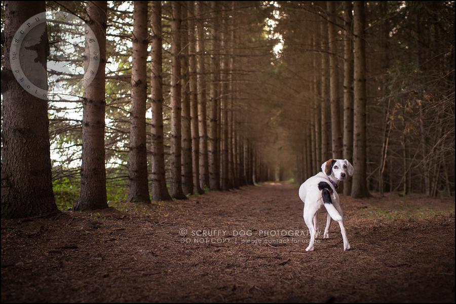 03-toronto-ontario-professional--dog-photographer-lucy frederick-70