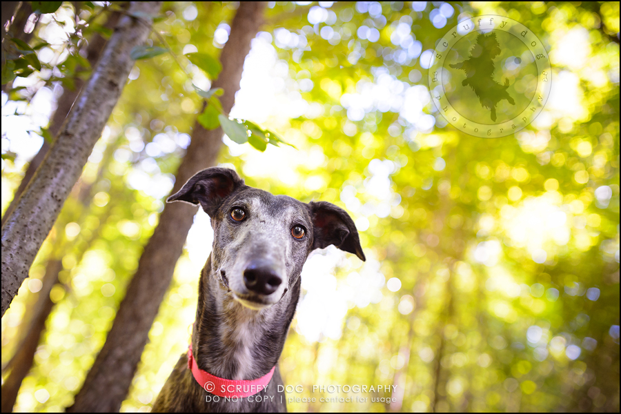 03-toronto-ontario-professional--dog-photographer-lucy poppy real-45-Edit