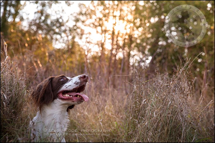 03-toronto-ontario-professional-pet-dog-photographer-jake boucher-316