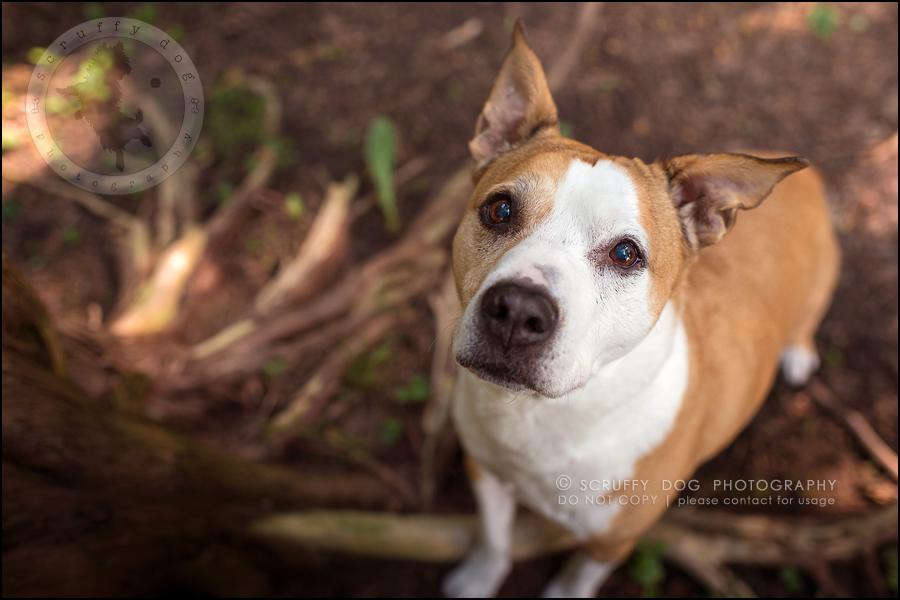 03-toronto-ontario-professional-pet-photographer-jade perry-53