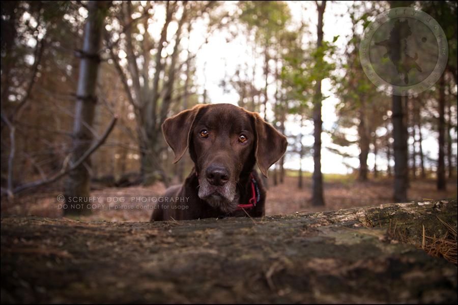 03-waterloo-ontario-best-professional-dog-photographer-max shoup-381-Edit