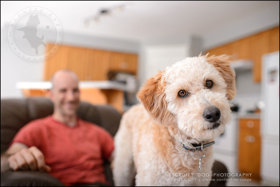 03-waterloo-ontario-dog-stock-photography-gulliver george-58