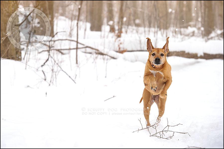 03-waterloo-ontario-professional--dog-photographer-best-makeda slinger-62
