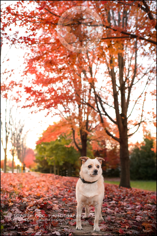 03-waterloo-ontario-professional-dog-photographer-best-max rooke-224