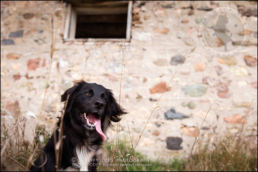 03-waterloo-ontario-professional-dog-photographer-hudson manning-69