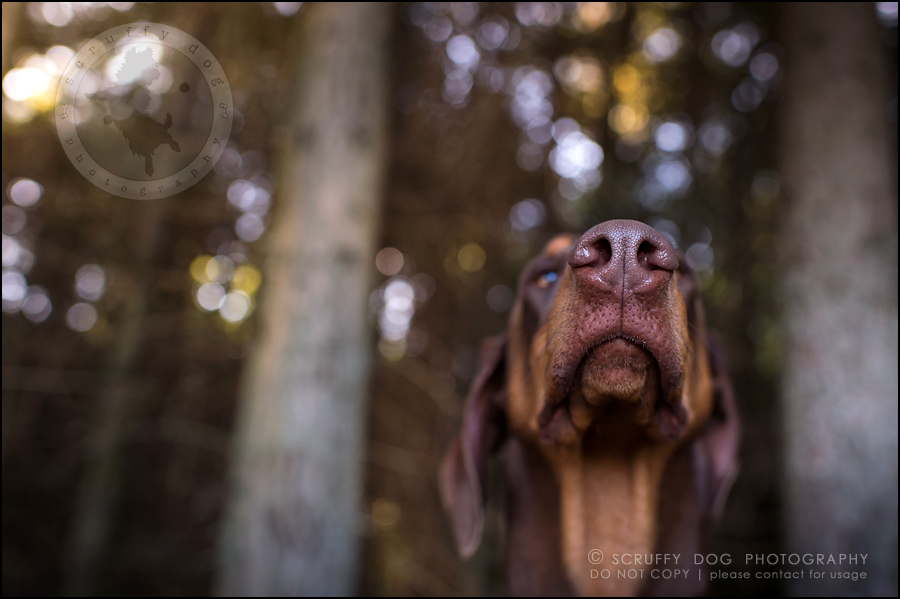 03_guelph_ontario_pet_photographer_best_dog_reese hunsberger-327