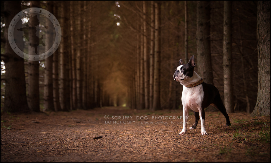 03_kitchener_ontario_pet_photographer_best_dog_princess dot carroll-52