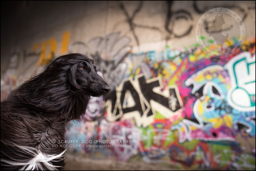 03_ontario_dog_stock_photography_dwss-105