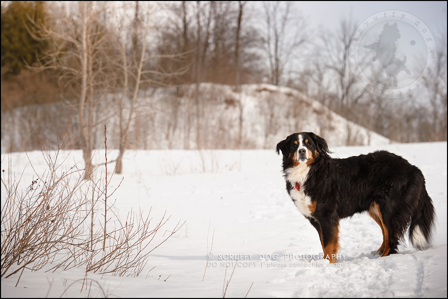 03_toronto_ontario_dog_stock_photography_grace zoe carr-13