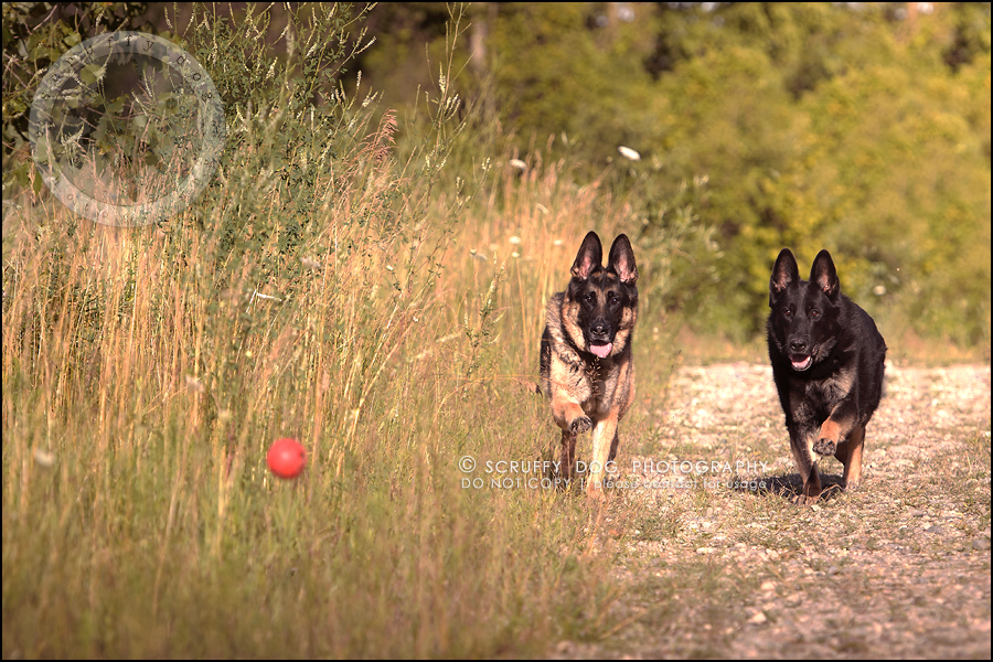04-toronto-ontario-best-professional-pet-photographer-maya blitz-413