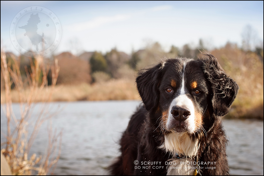 04-toronto-ontario-professional-dog-photographer-henry martha-39
