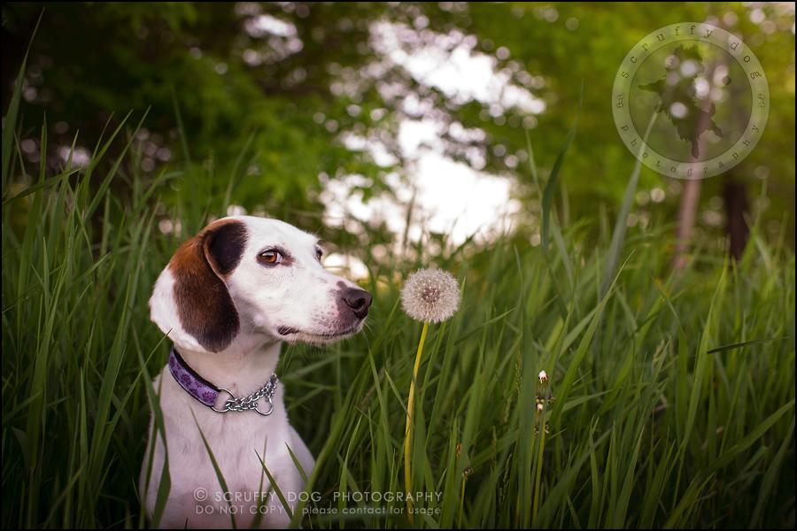 04-toronto-ontario-professional--dog-photographer-lucy frederick-323