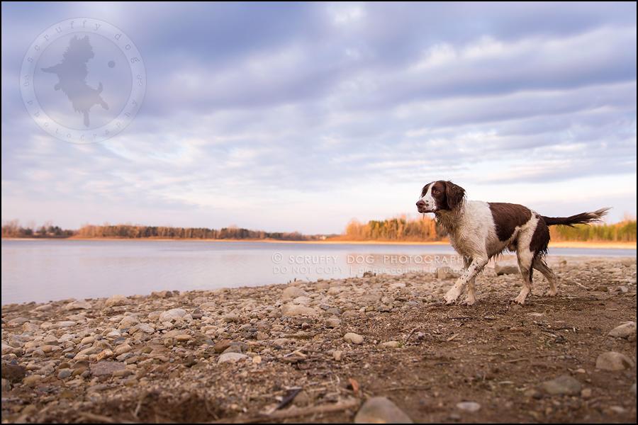 04-toronto-ontario-professional-pet-dog-photographer-jake boucher-1168
