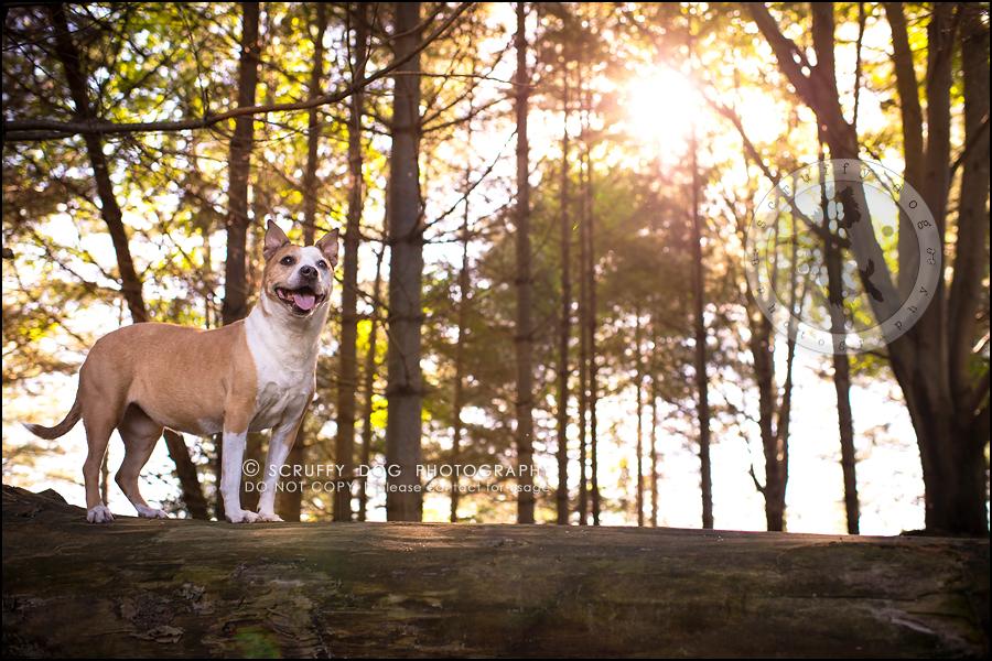 04-toronto-ontario-professional-pet-photographer-jade perry-183