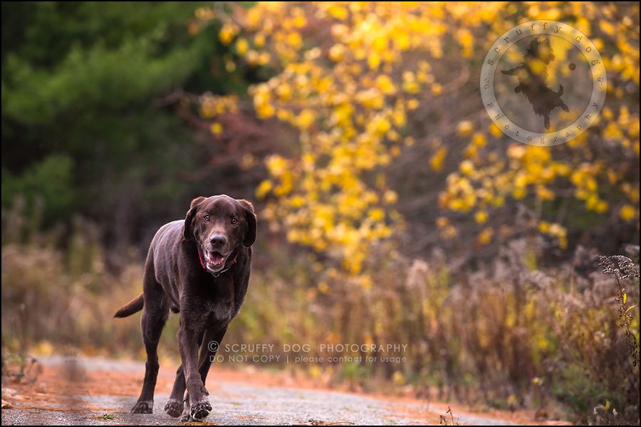 04-waterloo-ontario-best-professional-dog-photographer-max shoup-443