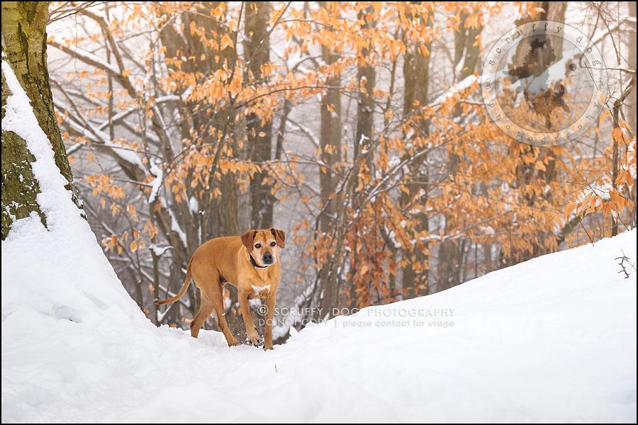 04-waterloo-ontario-professional--dog-photographer-best-makeda slinger-91