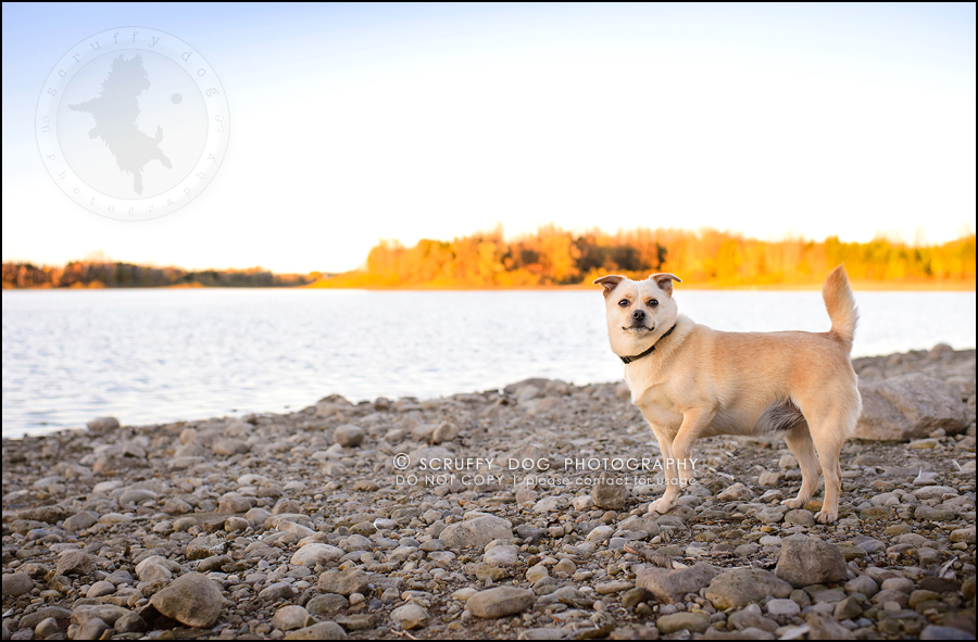 04-waterloo-ontario-professional-dog-photographer-best-max rooke-107