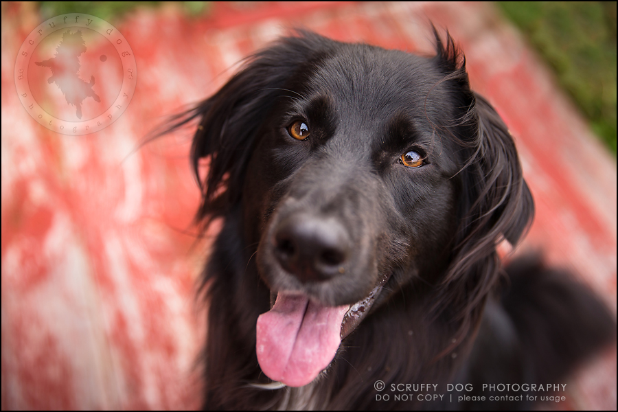 04-waterloo-ontario-professional-dog-photographer-hudson manning-116