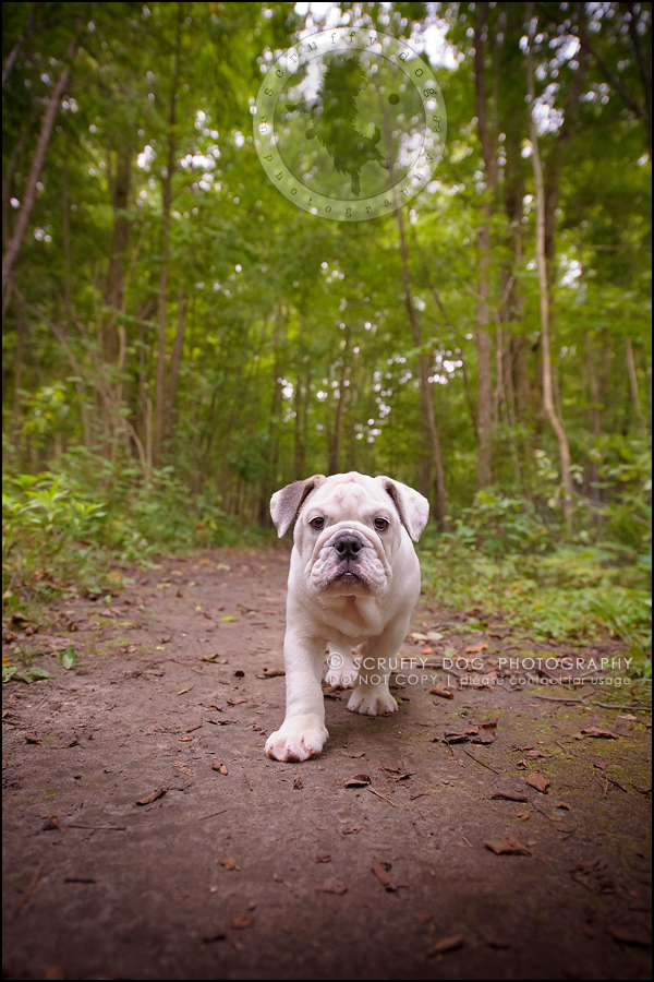 04_guelph_ontario_pet_photographer_best_dog_oliver eleanor fleming-219