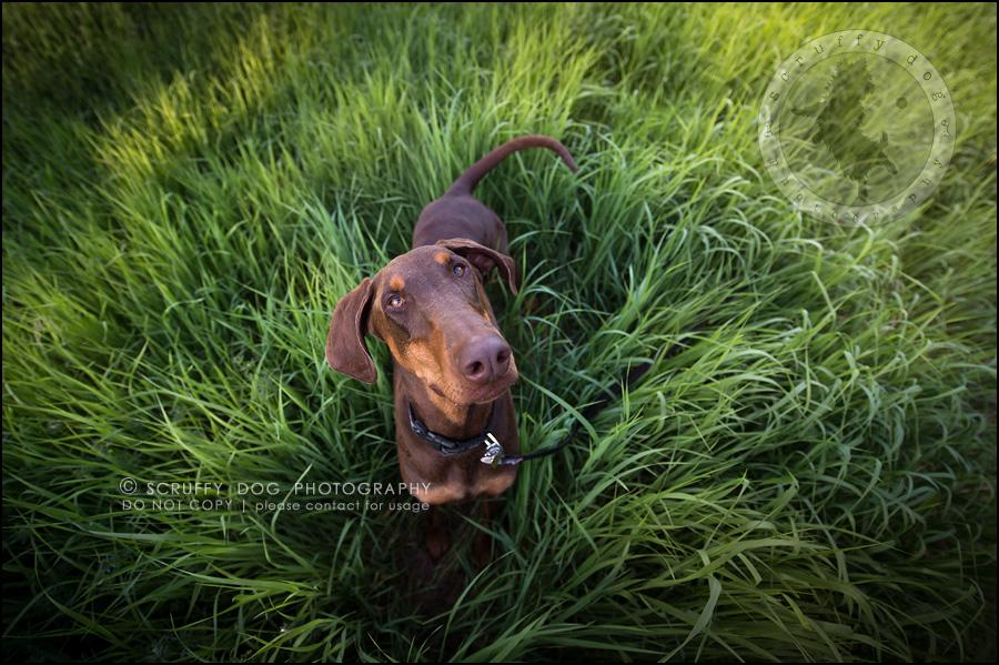 04_guelph_ontario_pet_photographer_best_dog_reese hunsberger-83