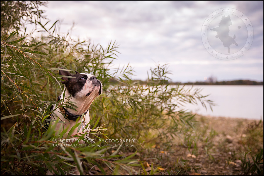04_kitchener_ontario_pet_photographer_best_dog_princess dot carroll-520