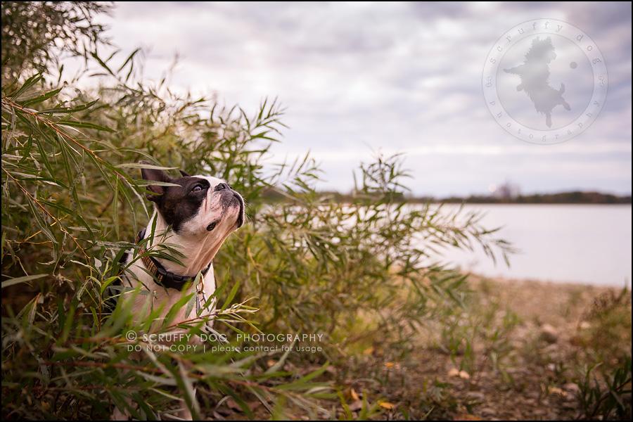 04_kitchener_ontario_pet_photographer_best_dog_princess dot carroll-520