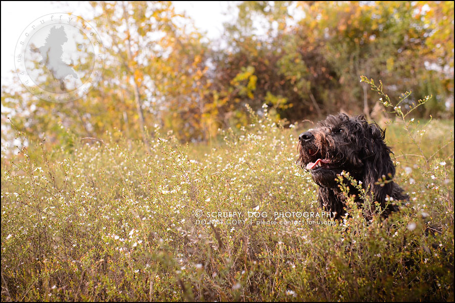 04_waterloo_ontario_best_pet_photographer_murphy odonovan-188