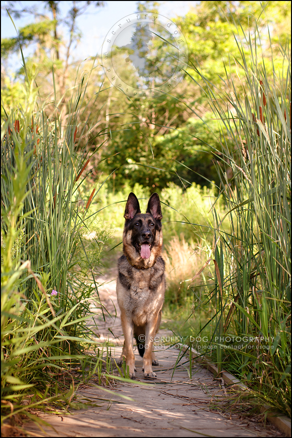 05-toronto-ontario-best-professional-pet-photographer-maya blitz-280