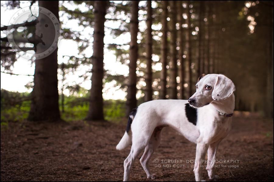 05-toronto-ontario-professional--dog-photographer-lucy frederick-95-Edit
