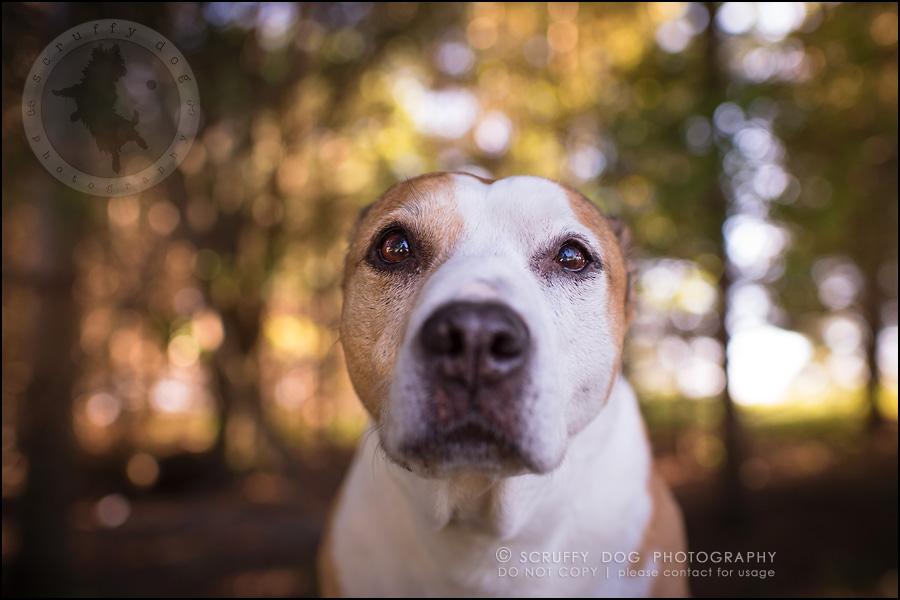 05-toronto-ontario-professional-pet-photographer-jade perry-143