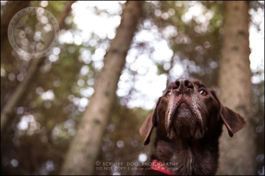 05-waterloo-ontario-best-professional-dog-photographer-max shoup-209