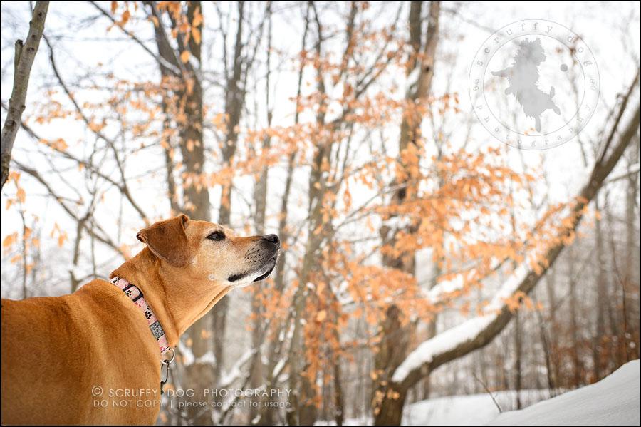 05-waterloo-ontario-professional--dog-photographer-best-makeda slinger-263