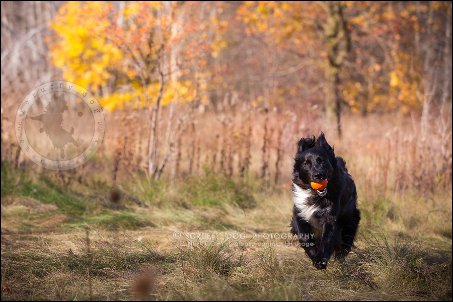 05-waterloo-ontario-professional-dog-photographer-hudson manning-176