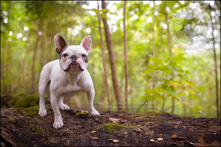 05_guelph_ontario_pet_photographer_best_dog_oliver eleanor fleming-4
