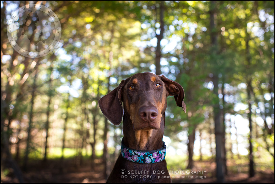 05_guelph_ontario_pet_photographer_best_dog_reese hunsberger-33