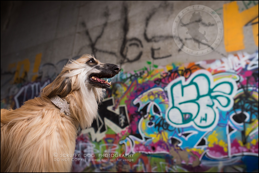 15_ontario_dog_stock_photography_dwss-516