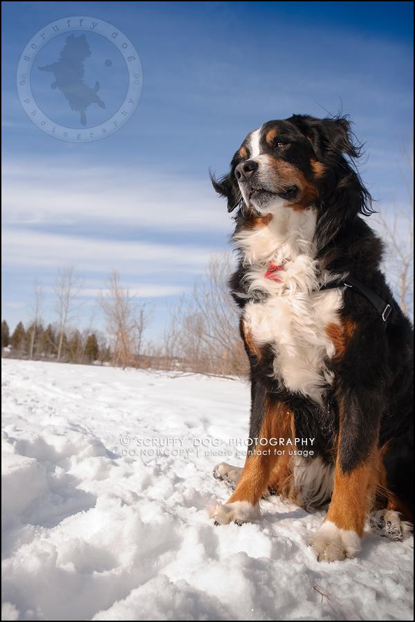 05_toronto_ontario_dog_stock_photography_grace zoe carr-158