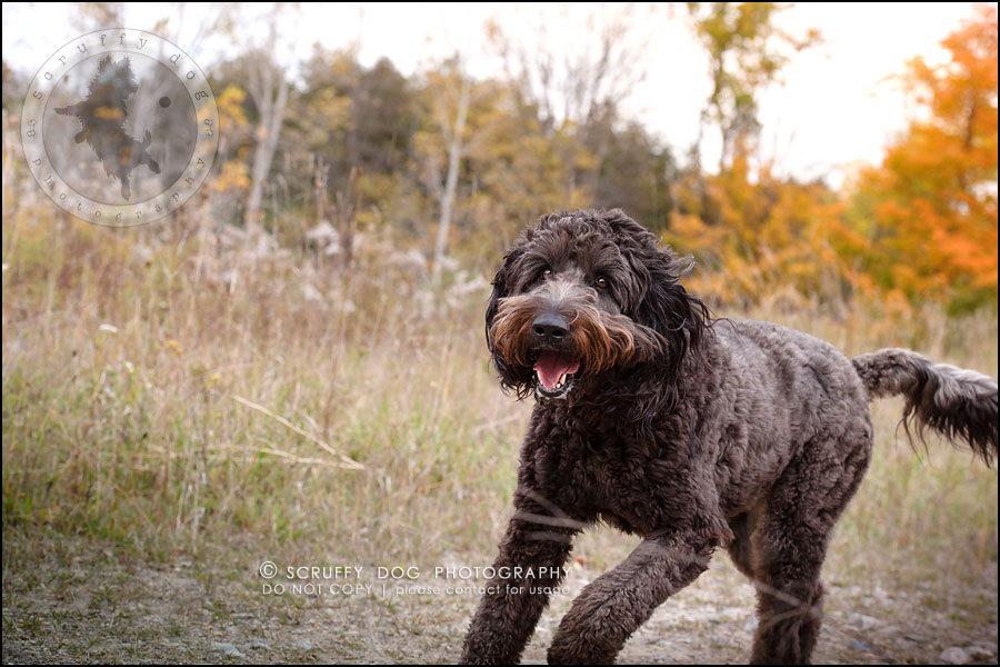 05_waterloo_ontario_best_pet_photographer_murphy odonovan-232