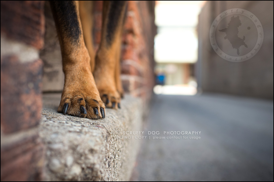05toronto_ontario_dog_stock_photography_geordi jessie ladrillo-43